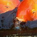 Orange Kiss by Irina Davis