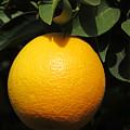 Orange by Laurel Powell