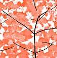 Orange Leaves Melody  by Jennie Marie Schell