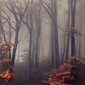 Orange Leaves Of Autumn by Jaroslaw Blaminsky