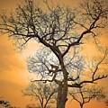 Orange Leopard by Lisa Byrne