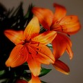 Orange Lilies by Judy  Waller