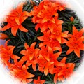 Orange Lilies Vignette by Barbara Griffin