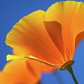 Orange by Lisa Lang