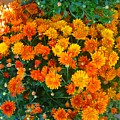 Orange Margarita Daisy by Gary Simmons