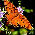 Orange Marvel by Lisa Renee Ludlum