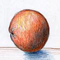 Orange by Nancy Mueller