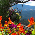 Orange Nasturtium Against Mountains by Jody Neumann