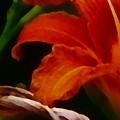 Orange Opening by Charleen Treasures
