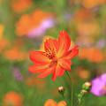 Orange Painted Landscape by Paul Ranky