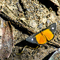 Orange Patch by Norman Johnson