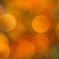 Orange Peel by Jan Bickerton