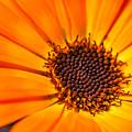 Orange Petal by James Holt