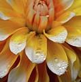 Orange Rain by Glen Baker