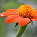 Orange by Raquel Daniell