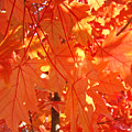 Orange Red Fall Leaves Autumn Tree Art Baslee Troutman by Baslee Troutman