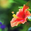 Orange Red Hibiscus by Sharon McConnell