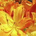 Orange Rhodies Flowers Art Rhododendron Baslee Troutman by Baslee Troutman