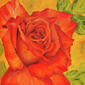 Orange Rose Blossom by Karen Kaspar