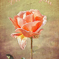 Orange Rose by Elaine Teague