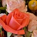 Orange Rose by Pam Meoli