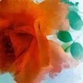 Orange Rose by Patricia Strand