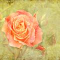 Orange Rose With Old Paint Texture Background by Vesela Yokova