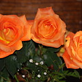 Orange Roses With Babysbreath by Joe Lee