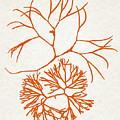 Orange Seaweed Marine Art Furcellaria Fastigiata by Christina Rollo