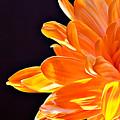 Orange Sherbet by Lois Bryan