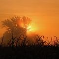 Orange Sky Rising by Rachel Cohen