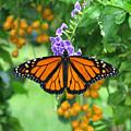 Orange Splendour by Peg Urban