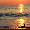 Orange Sunrise by Monique Flint