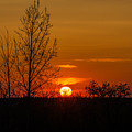 Orange Sunset Through The Trees by Ray Sheley