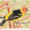 Orange Tanager by Linda Brody