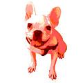 Orange Terrier by Linda Swon