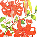 Orange Tiger Lilies by Laura Wilson
