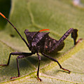 Orange Tipped Antennae by Douglas Barnett
