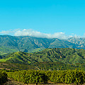 Orange Tree Grove, Santa Paula, Ventura by Panoramic Images