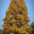 Orange Tree Pipestem Short Course by Teresa Mucha