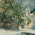 Orange Trees And Gate by Winslow Homer