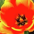 Orange Tulip Flowers In Spring Garden by Alex Grichenko