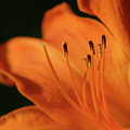 Orange Wave 3096 H_2 by Steven Ward