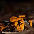 Orange Woodland Mushrooms by Douglas Barnett