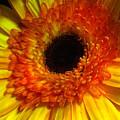 Orange-yellow by Kimberly Mohlenhoff