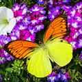 Orange Yellow Wings by Garry Gay