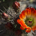 Orange You A Hedgehog  by Saija  Lehtonen