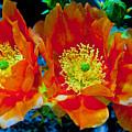 Orange3 by Joanne Gallery