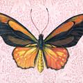 Oranged Birdwing by Mindy Lighthipe