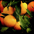 Oranges by Ernie Echols